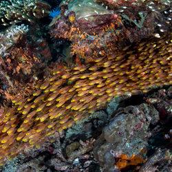 Reef Rings-Andy Lerner-bronze-NATURE-Underwater -4664