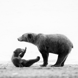Mother & Child-Andy Lerner-silver-NATURE-Wildlife -5127