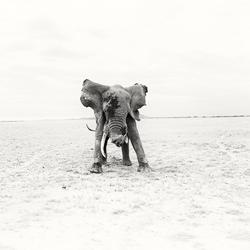 Wildman-Andy Lerner-bronze-NATURE-Wildlife -4665