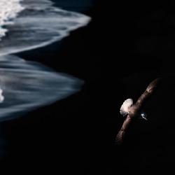 Wings-Adrian Popan-bronze-NATURE-Wildlife -4642