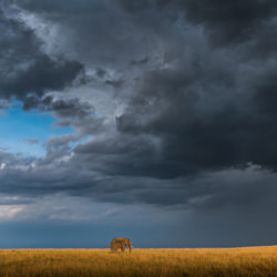 Stormfront-Zhayynn James-finalist-NATURE-Wildlife -4842
