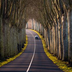 Tree Tunnel-Remo Daut-silver-EDITORIAL-Travel-5163