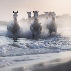 The Legendary Horses-Davide Giannetti-bronze-NATURE-Other -5252