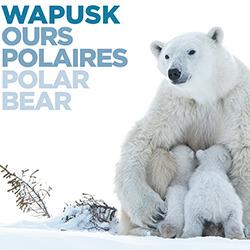WAPUSK OURS POLAIRES POLAR BEAR-DOROTA SENECHAL-bronze-BOOK-Nature-5258