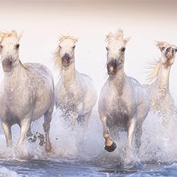 The Legendary Horses-Davide Giannetti-silver-NATURE-Other -5721