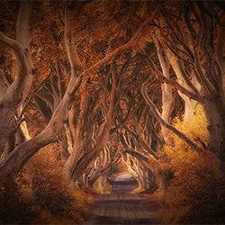 die dunklen Hecken-Judith Kuhn-Bronze-NATUR-Bäume -5254