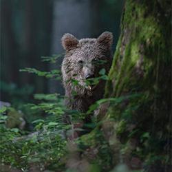 LAND OF BEARS-marcello galleano-bronze-NATURE-Wildlife -5237
