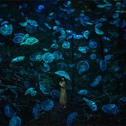 Princess Jellyfish-HIROMICHI SHIMIZU-gold-FINE ART-Portrait -5635