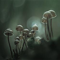Fungi and mushroom-Antonio Coelho-bronze-NATURE-Other -5209