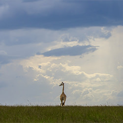 Away from the storm-Nitin Michael-finalist-NATURE-Landscapes -5436