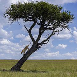 Tree Climbing Brother-Nitin Michael-bronze-NATURE-Wildlife -5221