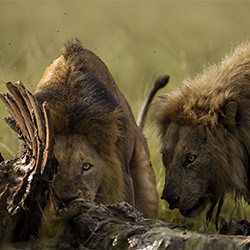 Hungry Eyes-Nitin Michael-finalist-NATURE-Wildlife -5439
