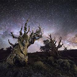 The Ancient Bristlecone Kiefer-Derek McCoy-Bronze-SPEZIAL-Nachtfotografie -5362