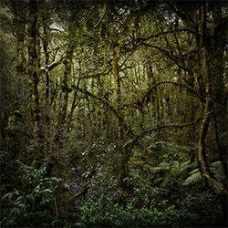 Regenwald-Stephan Romer-Bronze-NATUR-Bäume -5306