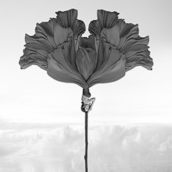 Beidseitiger Windblumen-Kenneth Lam-Gold-FINE ART-Abstract -5643