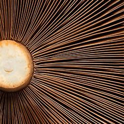 Cream of the Crop-Brayden Lim-bronze-ADVERTISING-Food -5336