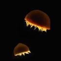 TATAkikiGAGAzette....tirelette - Page 6 One_eyeland_jellyfish_by_liz_mcburney_36993