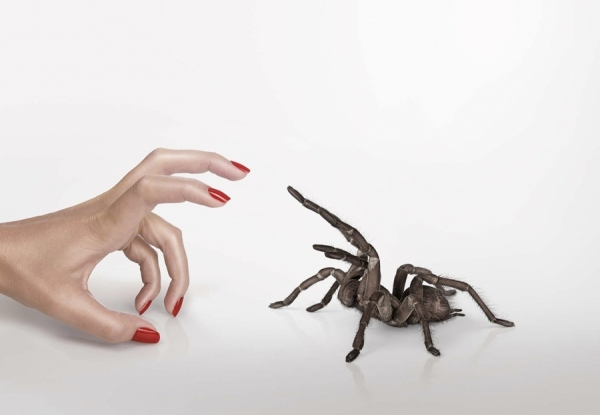 Photograph Adam Taylor Hand And Spider on One Eyeland