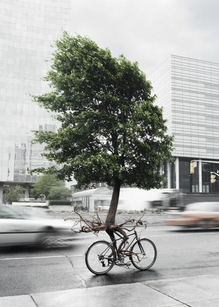 Photograph Philip Rostron Livegreen Tree On Bike on One Eyeland