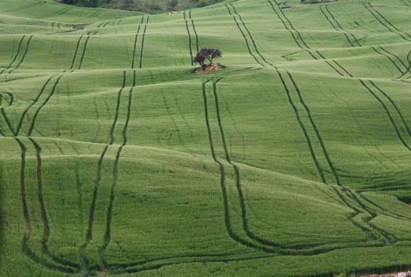 Photograph Jan Katuin Green Lines on One Eyeland