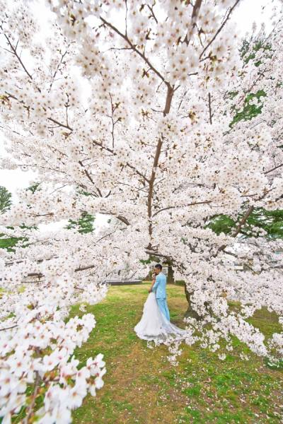 Photograph Sharad Haksar Wedding Couple Cherry Blossom Japan on One Eyeland