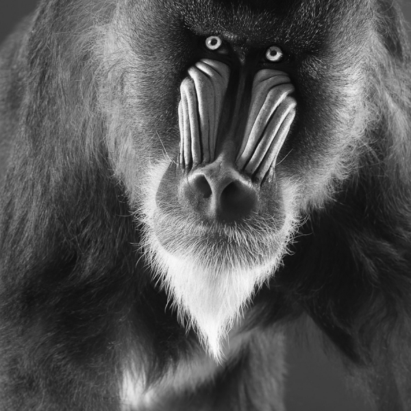 Photograph Lennette Newell Man Ape on One Eyeland