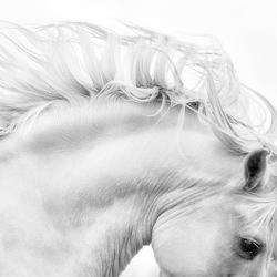 White Stallion-Bev Pettit-bronze-black_and_white-1102