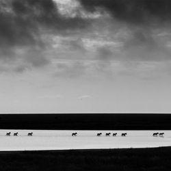 Zebra Crossing-Zhayynn James-finalist-black_and_white-1313