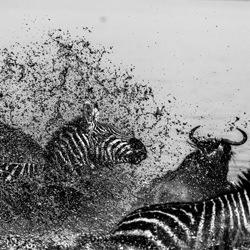 Veil Of Mud-Zhayynn James-finalist-black_and_white-1315