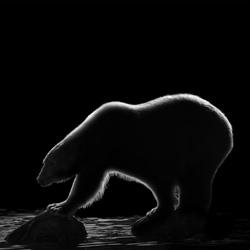 Arctic Darkness-Thomas Vijayan-bronze-black_and_white-1214