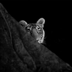 Beauty In The Hide-Thomas Vijayan-finalist-black_and_white-1422