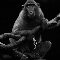 Innocent Beast-Partha Roy-bronze-black_and_white-1100