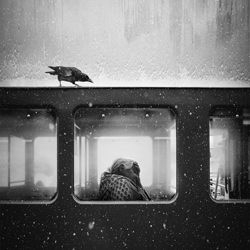 THE CROW OF LVIV-Jack Savage-gold-black_and_white-1503