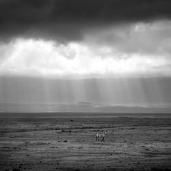 Lonely soul-Silvia Rodriguez Gonzalez-finalist-black_and_white-2648