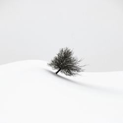white winter-Renate Wasinger-bronze-black_and_white-6412
