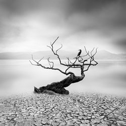 Breath of Spring-George Digalakis-gold-black_and_white-6574
