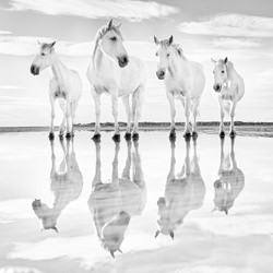 Calm waters-Harry Skeggs-finalist-black_and_white-6464