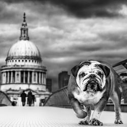 The courage to continue-Harry Skeggs-finalist-black_and_white-6469