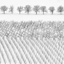 Winter trees-Anatolie Poiata-silver-black_and_white-6614