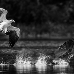 Attack-Tong Leng Liew-finalist-black_and_white-6533