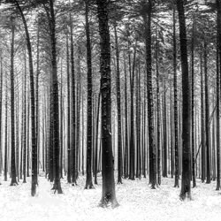 Into the woods-Marc Barthelemy-finalist-black_and_white-6502