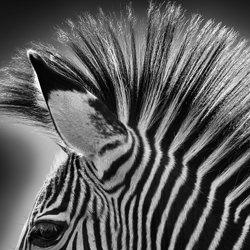 punk-Cedric Tamani-silver-black_and_white-6619