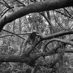 Everglades Jungle-Steve Lash-finalist-black_and_white-6446