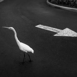 Opposite Senses.-Jose Ney Mila Espinosa-silver-black_and_white-6603