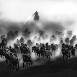 Galloping-Kok Tien Sang-silver-black_and_white-6625