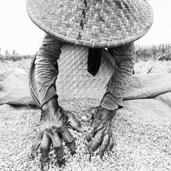Rice Worker-Andy Lerner-finalist-fine_art-2950