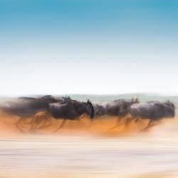 The Race-Thomas Vijayan-finalist-fine_art-2934
