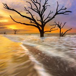 Gezeitenbäume-Craig Bill-Finalist-fine_art-2897