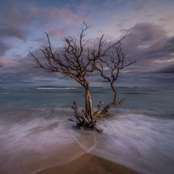 Baum im Meer-Steve Turner-Finalist-fine_art-2944