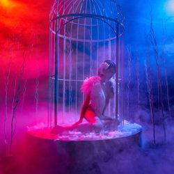 Caged Bird-Luk Kenneth-finalist-fine_art-4184